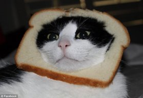 Im*bread*cat