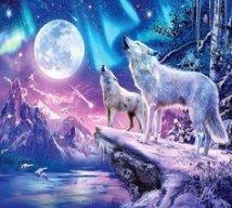 lilythewolf